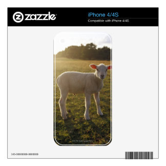 A Lamb at the Setting of the Sun Sweden Decals For The iPhone 4