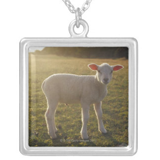 A Lamb at the Setting of the Sun Sweden Silver Plated Necklace