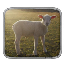 A Lamb at the Setting of the Sun Sweden Sleeve For iPads