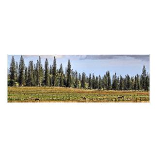A Lanai Ranch Panoramic Photo Print
