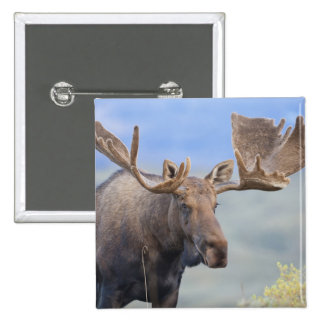 A large bull moose stands among willows 2 2 inch square button