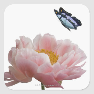 a large pink peony is visited by a ethereal square sticker