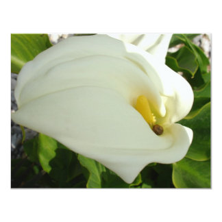 A Large Single White Calla Lily Flower Card