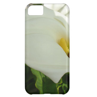 A Large Single White Calla Lily Flower iPhone 5C Case