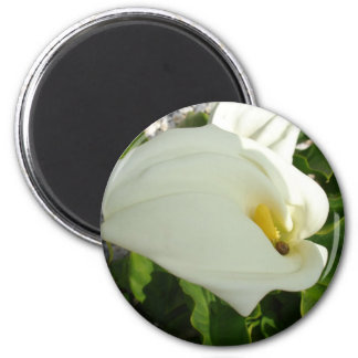 A Large Single White Calla Lily Flower Magnet