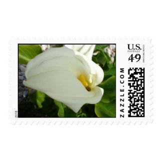 A Large Single White Calla Lily Flower Stamps