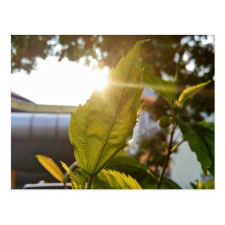 A leaf highlighted by the sun postcard