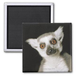 A lemur. 2 inch square magnet