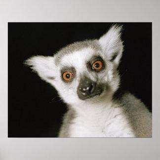 A lemur. poster