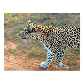 A Leopard Walking Postcard