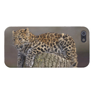 A Leopard's Tail iPhone 4 Speck Case