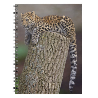 A Leopard's Tail Notebook
