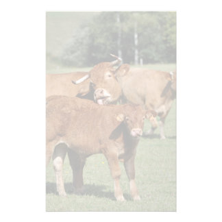 A Limousin cow giving her calf a wash Stationery