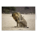 A Lion cleaning its back paw, Kgalagadi Greeting Card