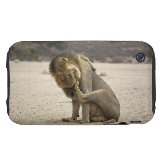 A Lion cleaning its back paw, Kgalagadi iPhone 3 Tough Case