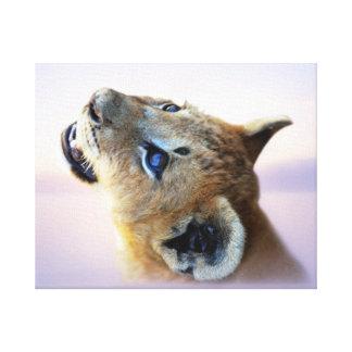 A lion cub at daybreak gallery wrap canvas