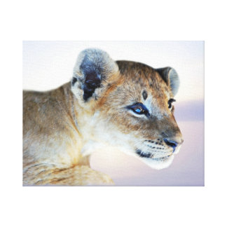 A lion cub canvas print