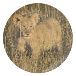 A lion cub laying in the bush in the Maasai Mara Dinner Plate