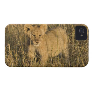 A lion cub laying in the bush in the Maasai Mara iPhone 4 Case