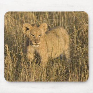 A lion cub laying in the bush in the Maasai Mara Mouse Pad