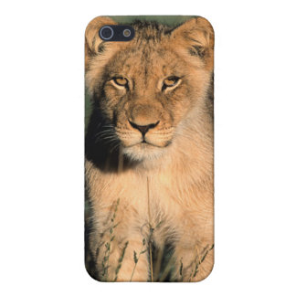 A Lion cub observes the camera from the long grass Case For iPhone SE/5/5s