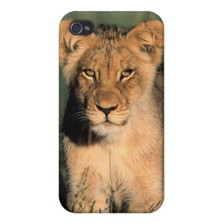 A Lion cub observes the camera from the long grass iPhone 4/4S Case
