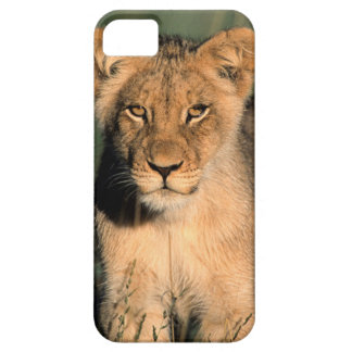 A Lion cub observes the camera from the long grass iPhone SE/5/5s Case
