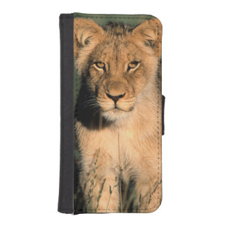 A Lion cub observes the camera from the long grass Wallet Phone Case For iPhone SE/5/5s
