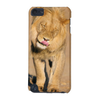 A Lion shaking its head and licking its mouth iPod Touch (5th Generation) Cover