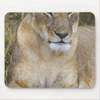 A lion sitting the high grass of the Maasai Mouse Pad