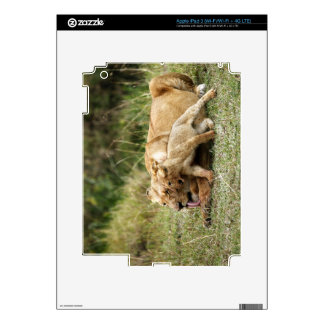 A lioness and her playful cub iPad 3 skins