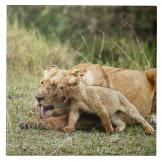 A lioness and her playful cub large square tile