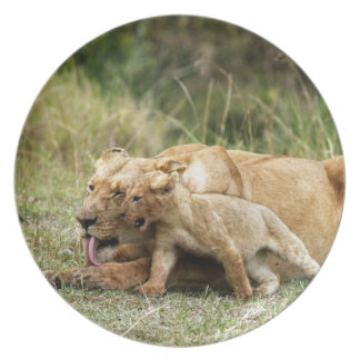 A lioness and her playful cub plate