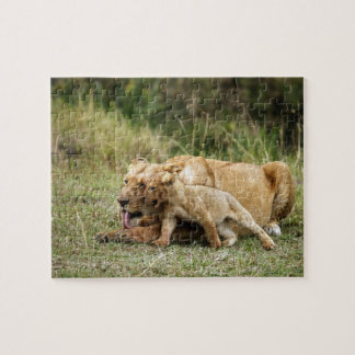 A lioness and her playful cub puzzle