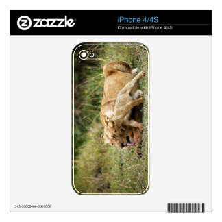 A lioness and her playful cub iPhone 4 skins