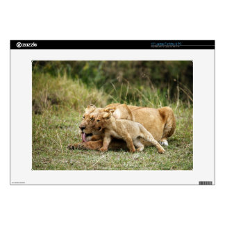 A lioness and her playful cub skins for laptops
