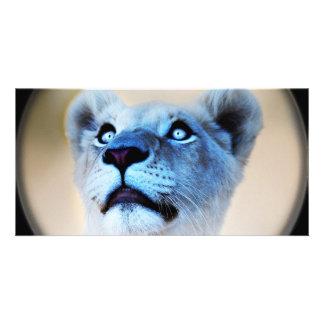 A lions surprise card