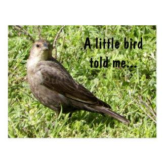 A Little Bird Told Me - Postcard