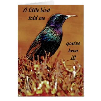A Little Bird Told Me Starling Bird Photograph Greeting Cards