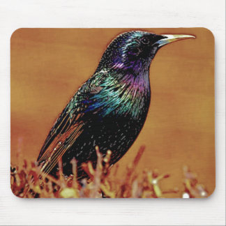 A Little Bird Told Me Starling Bird Photograph Mouse Pad
