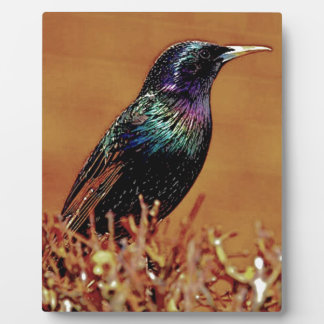 A Little Bird Told Me Starling Bird Photograph Plaque