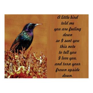 A Little Bird Told Me Starling Bird Photograph Post Cards