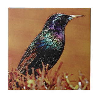 A Little Bird Told Me Starling Bird Photograph Tile