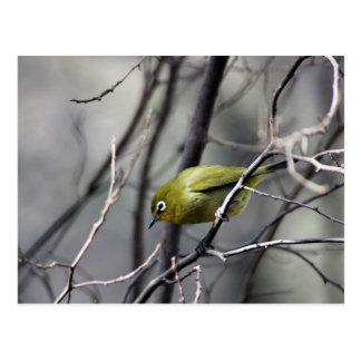 A little Bird Whispered In My Ear Postcard