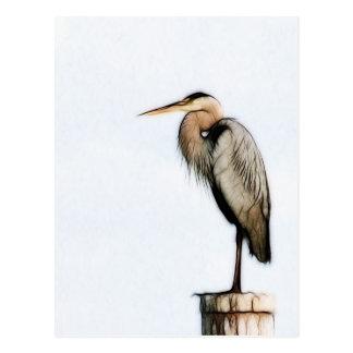 A Little Birdie- Posing Pelican Postcard