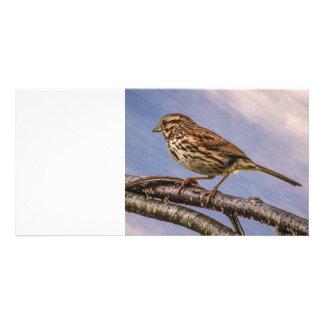 A Little Brown Bird Photo Greeting Card