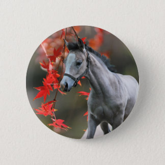A Little Foal Pinback Button