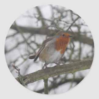 A little red Robin in the tree Classic Round Sticker