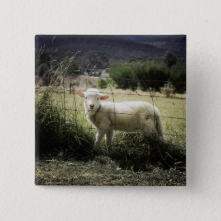 a little white lamb behind a fence in a field button