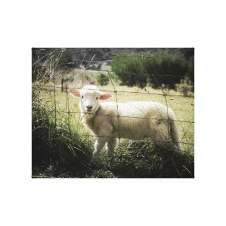 a little white lamb behind a fence in a field canvas print